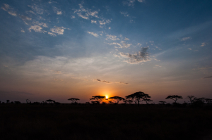 serengeti sunrise, Yoni Lerner August 7, 2012
