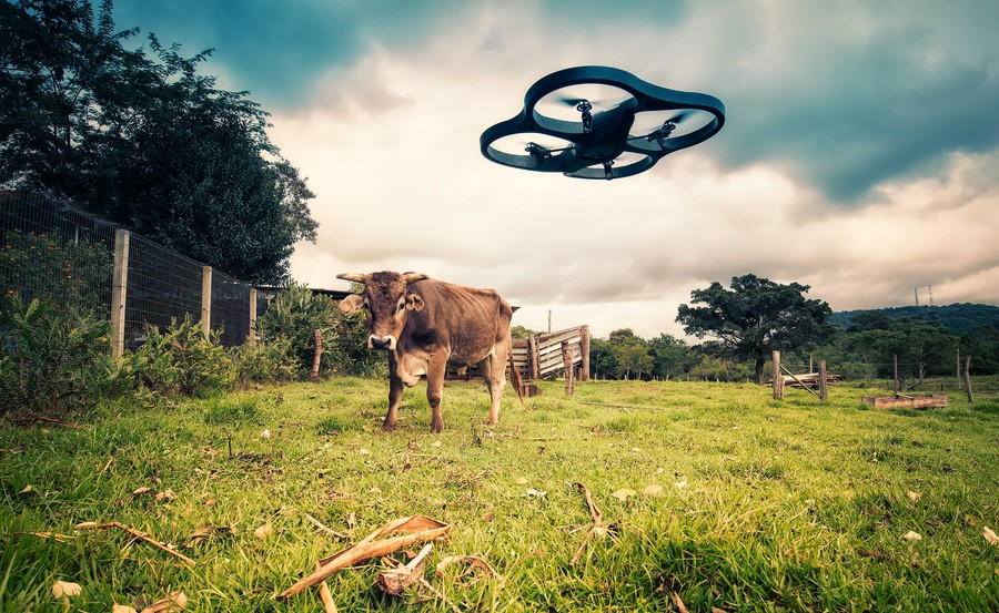 Drone vs Cow, Mauricio Lima April 20, 2014
