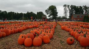 Pumpkin Purgatory, SullivanGardner September 26, 2010