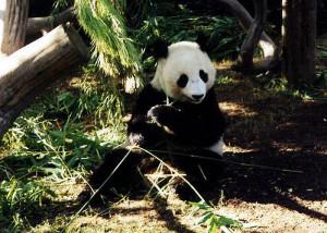 Panda, Kai Schreiber January 15, 2005