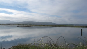 Arcata Marsh, Credit: Wikimedia Commons