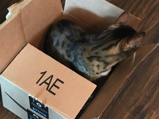 My Bengal, Apollo, really enjoyed the delivery too, but mostly just the box.