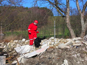 Search and rescue dog, Credit: Wikimedia Commons